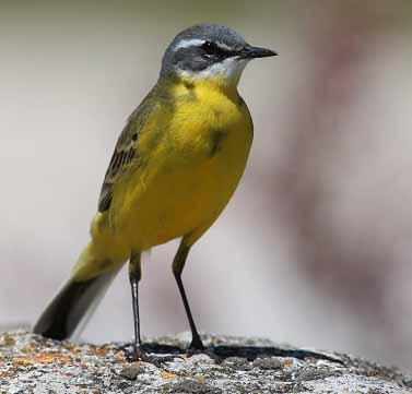 CISE promove Observação de Aves em vários concelhos